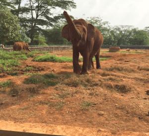 ラグナン動物園にいるゾウ
