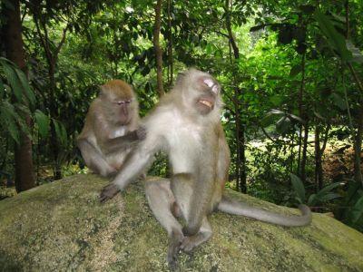 Monkey Business at Bukit Timah – backpackerlee