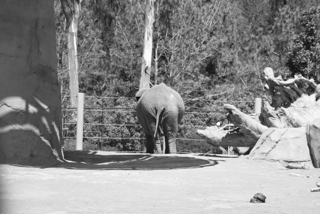 Elephant Butt.