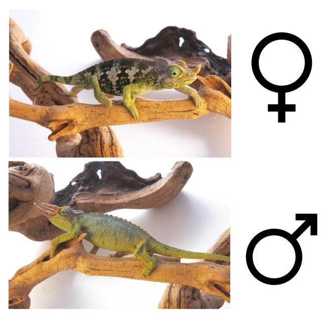 mt meru chameleon comparison