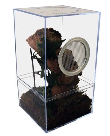 arboreal tarantula terrarium kit