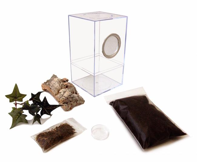 tarantula terrarium kit