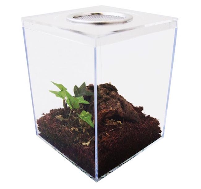 terrestrial tarantula kit