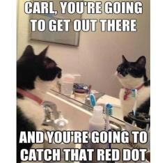 carl the cat
