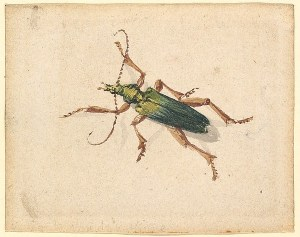 Green Beetle With Brown Legs by Jan Vincentsz van der Vinne