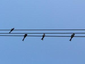 bird-678917_1280