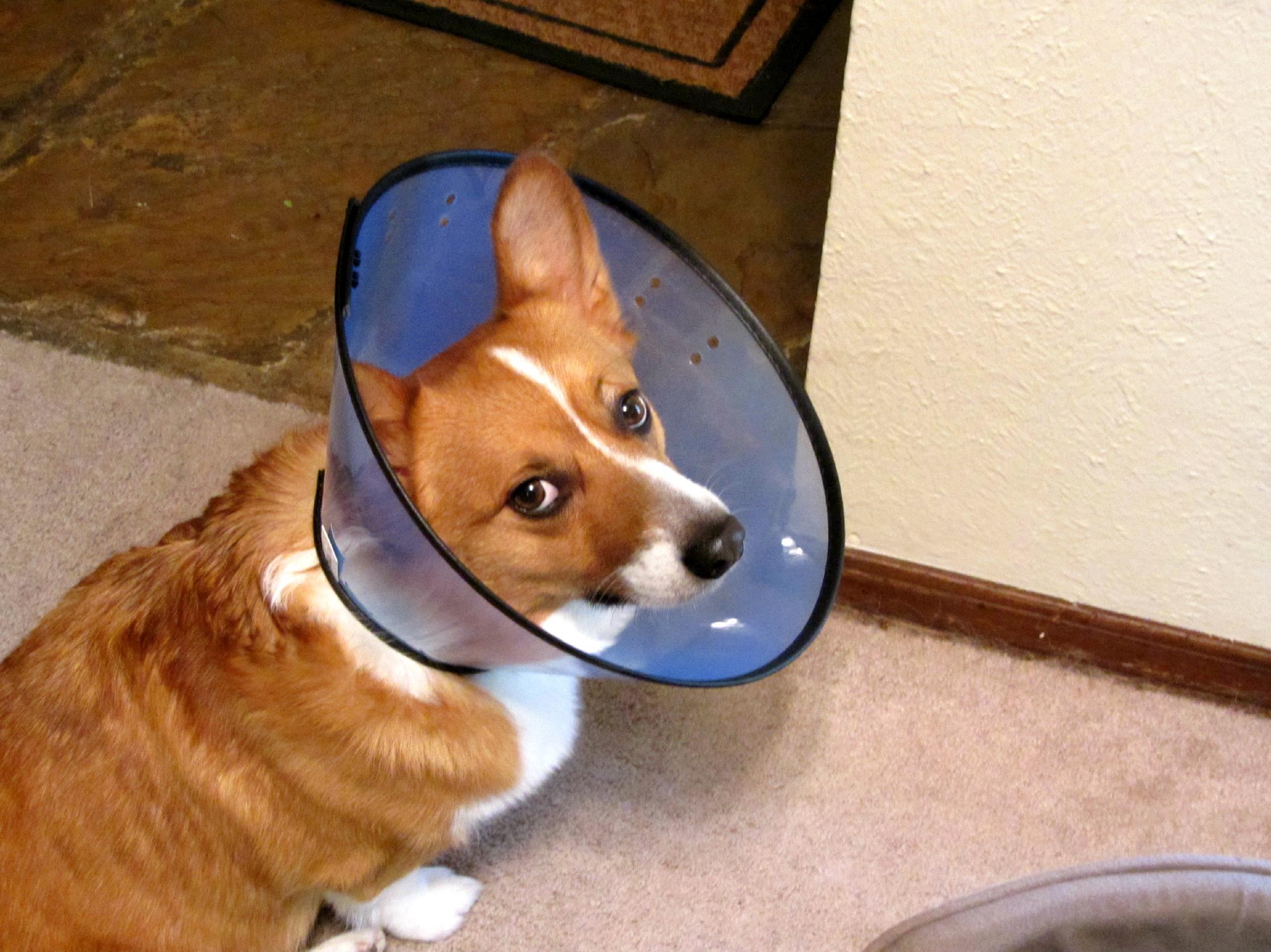 Amusing Shame Pet Shame Ny Cone For Hot Spot Conviction Cone bark post Cone Of Shame