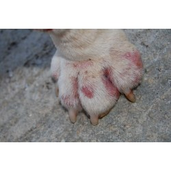 Small Crop Of How Many Toes Does A Dog Have