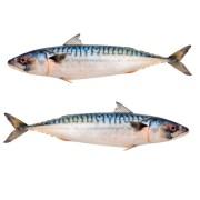Two Whole Mackerel