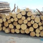 Solusi Efektif Mengawetkan Kayu Pinus : Aplikasikan Solusi Efektif Mengawetkan Kayu Pinus Dengan Bahan Pengawet Yang Ampuh