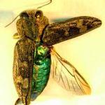 Sekilas Info tentang Harga Obat Pengawetan Kayu Yogyakarta Specialist Anti Serangga : Kumbang Kayu