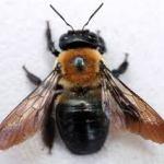 Jangan Mudah Tertipu: Harga Obat Pembasmi Serangga Perusak Kayu ini Sangat Murah : Kumbang Perusak