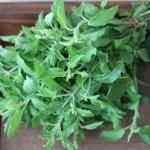 We love da' Herbs: Holy Basil (Tulsi)