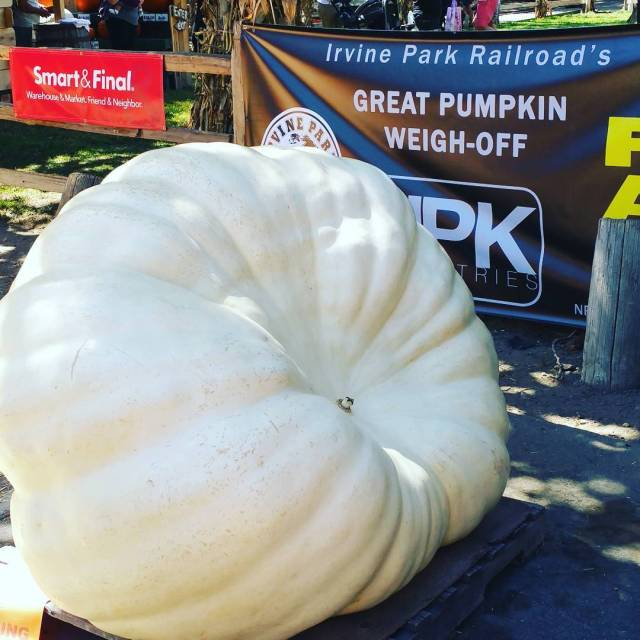 Today we are at irvineparkrailroad for the greatpumpkinweightoff This giantpumpkinhellip