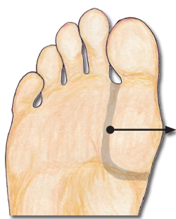 The thymus reflexology point