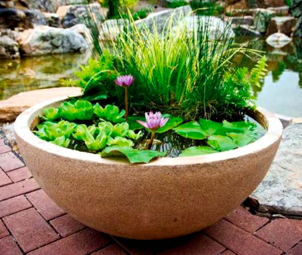 Pond In A Pot Create A Container Water Garden