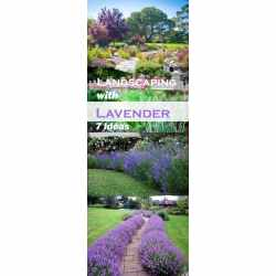 Small Crop Of Gardening Ideas For Backyard