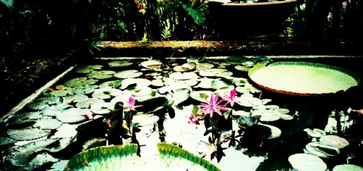 De la Lorraine à Bali en voyage organisé - Interview I went to bali too! (8)