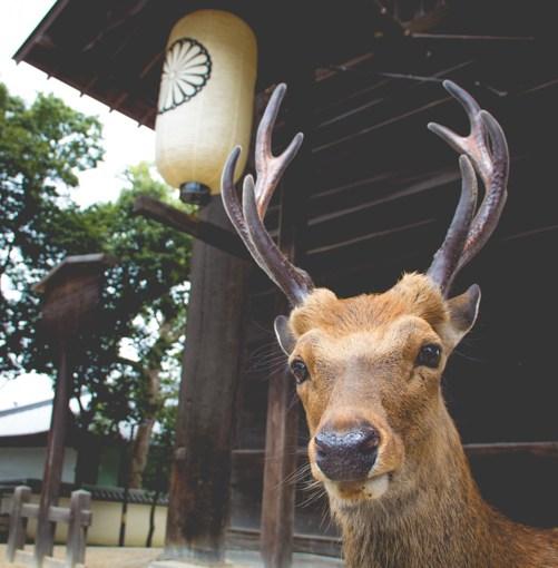 25 juillet 2016 : Nara