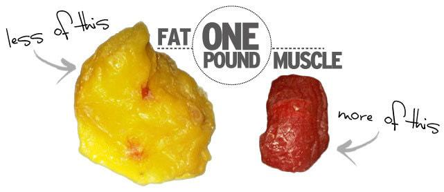 Muscle vs fat image