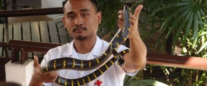 Queen Saovabha Snake Farm review