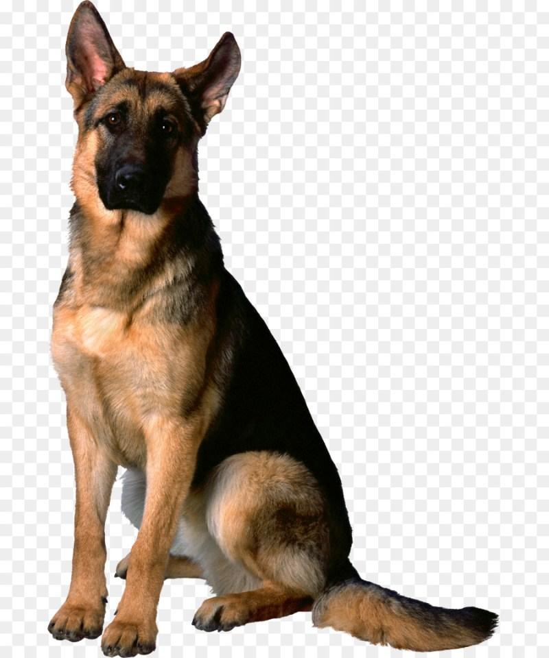 Large Of German Shepherd Mixed With Husky