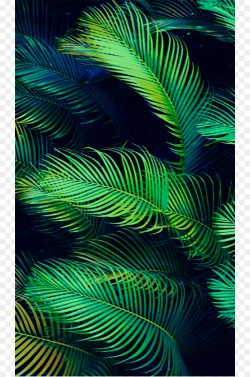 Small Of Palm Leaves Wallpaper
