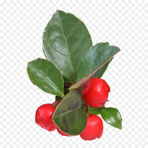 Medium Crop Of Barbados Cherry Tree