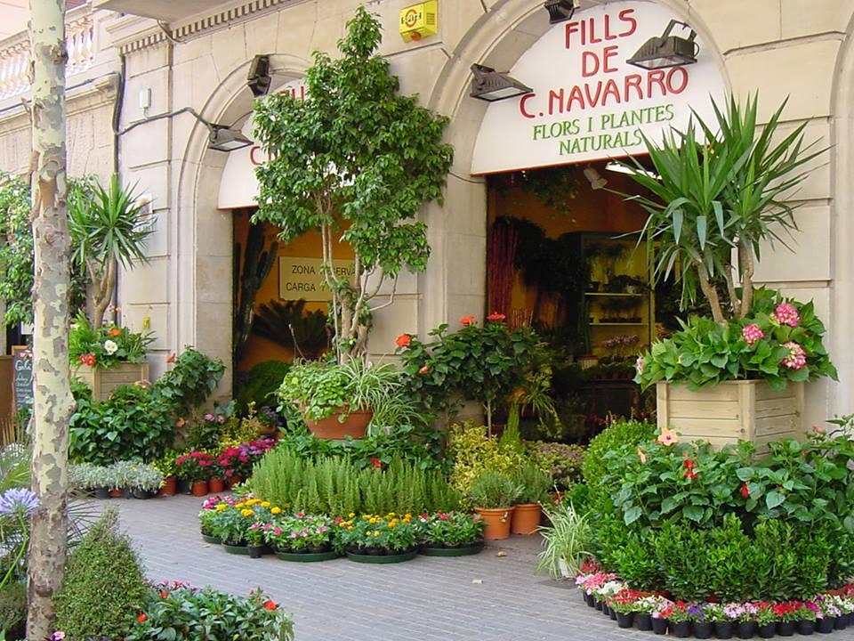 palma-palmones-floristeria-navarro2