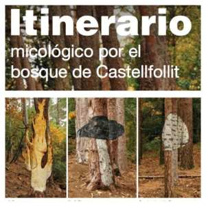 bosc-pintat-poblet-barcelona-colours