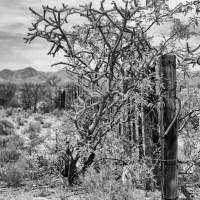 Leaning on the Desert Fence