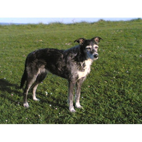 Medium Crop Of Irish Dog Breeds
