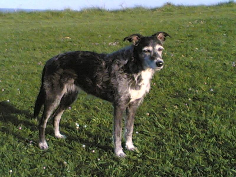 Large Of Irish Dog Breeds