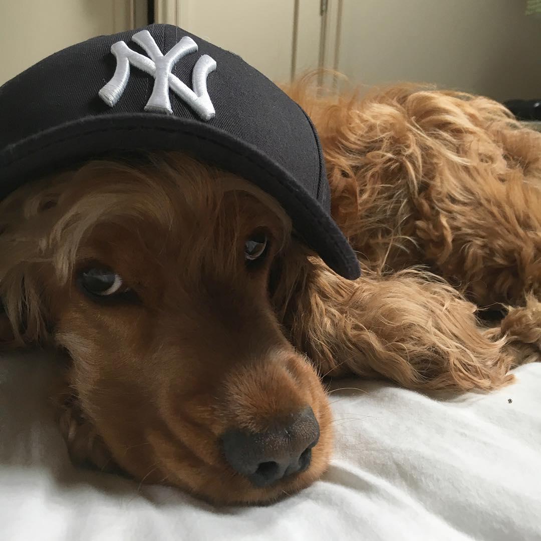 Absorbing You Barkpost Ny Sad Dog Memes Sad Puppy Dog S Meme Just Found Out Yankees Win World Dogs Some Very Sad News bark post Sad Dog Meme