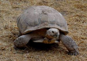 Sponsor Tanky the Tortoise
