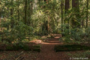 All Access Trail at Hendy Woods State Park