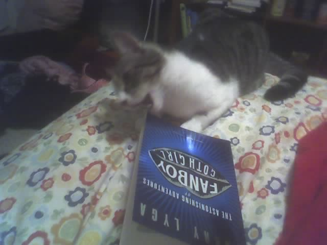 Cat eating Fanboy