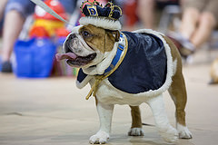 35th Annual Beautiful Bulldog Contest