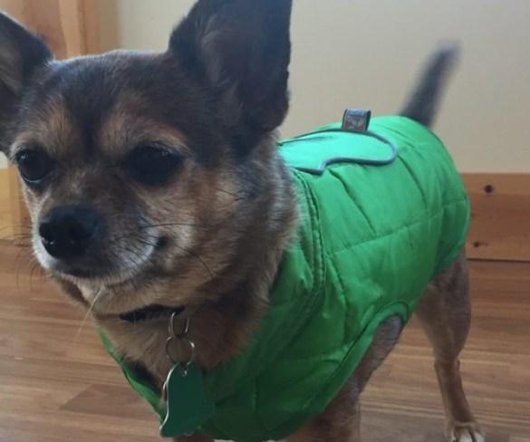 Kurgo Loft Dog Jackets for Winter Months