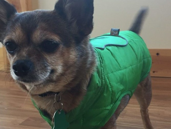 Kurgo Loft Dog Jackets for Winter Months