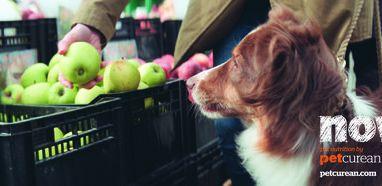 Win 2 Bags of Premium Petcurean Dog Food