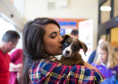 National Adoption Weekend at PetSmart starts today