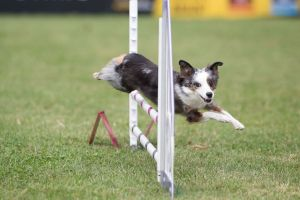 Incredible Dog Challenge