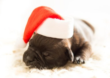 Dog Safety through the Holidays