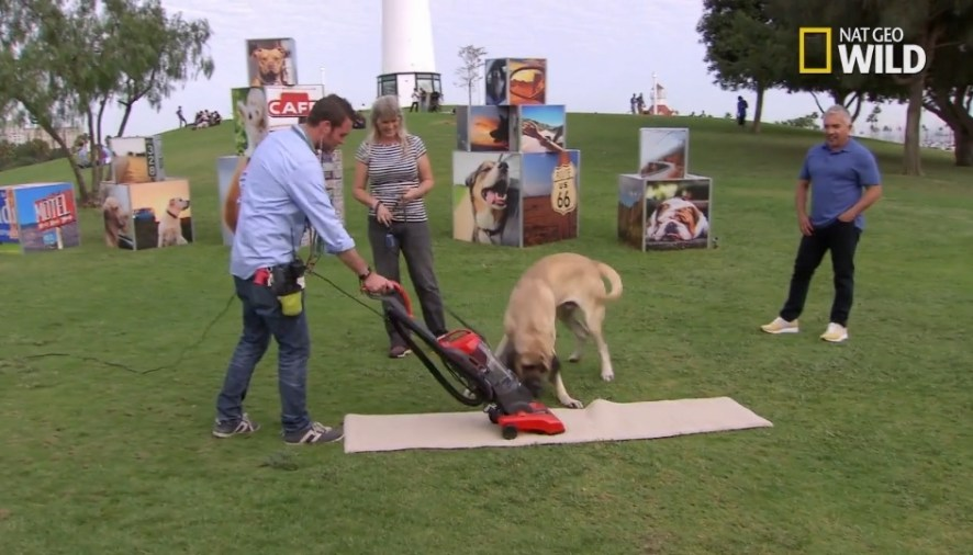 Sneak Peek of Cesar Millan's Dog Nation: Dogs & Vacuums