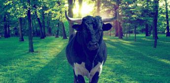 basta-touradas-abolicao