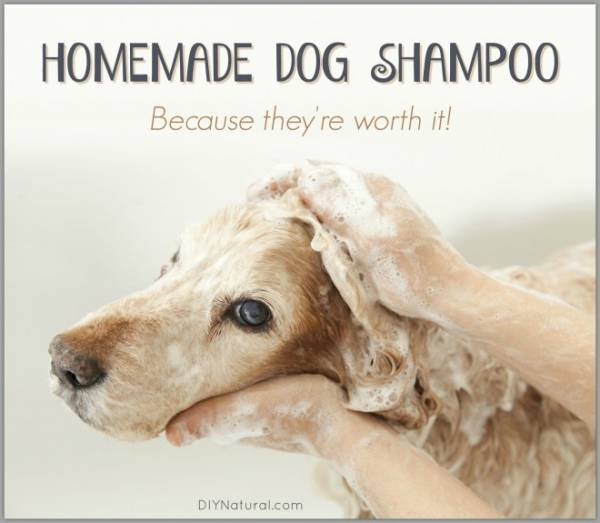 Homemade-Dog-Shampoo-660x575