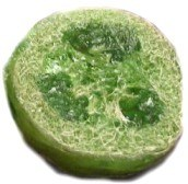 Lime Loofah Soap Tutorial