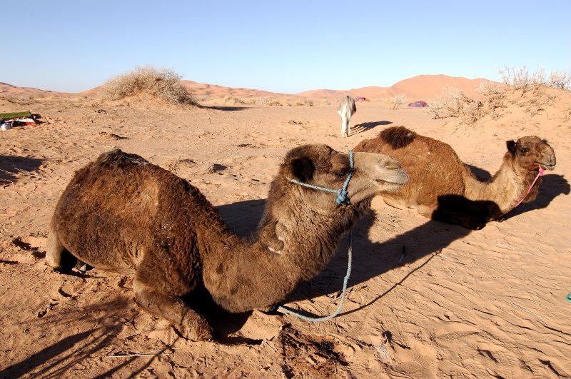 Morocco_Africa_Flickr_Rosino_December_2005_84037245