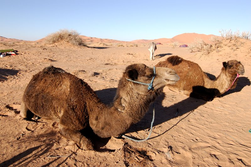 Morocco_Africa_Flickr_Rosino_December_2005_84037245